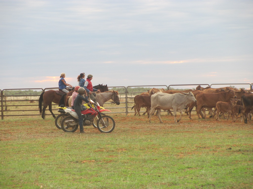 Bikes and Horses are both used in mustering and yarding up L-R Camille, Wave, Santiago, Jaime, Isaac