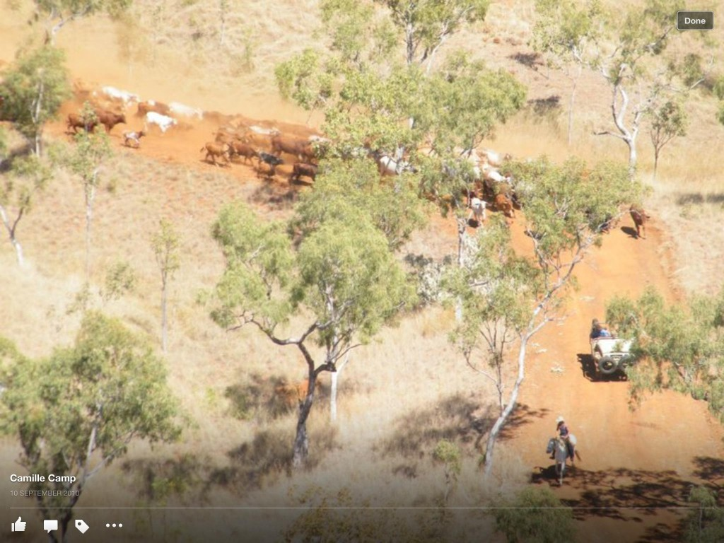 Mustering Charmley River with horses and the bullcatcher