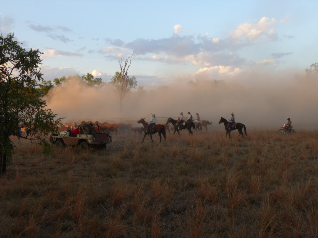 Mustering Charmley River with horses and the bullcatcher 2