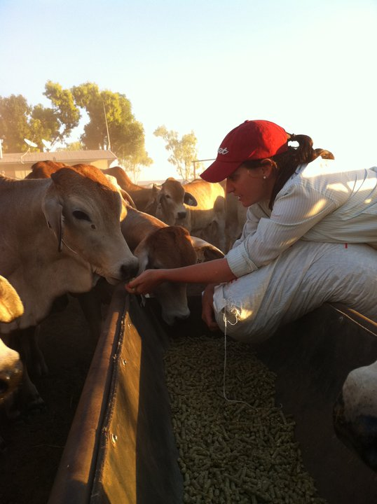 Photo 7. Beautifully quiet weaner allowing me to feed him by hand