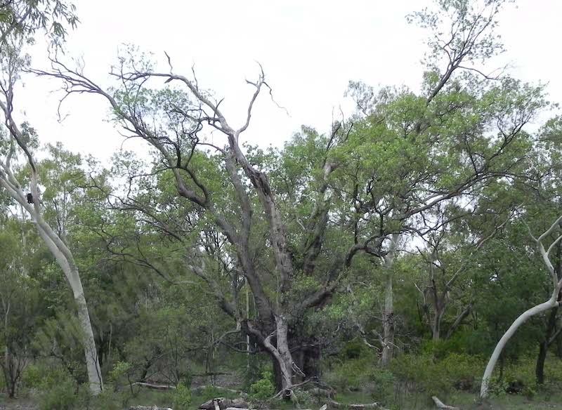 #4.1. Old tree