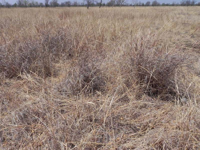 #4.6 Dry grasses