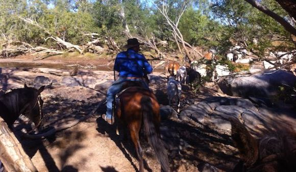 2.4 Dave Mustering on Horseback