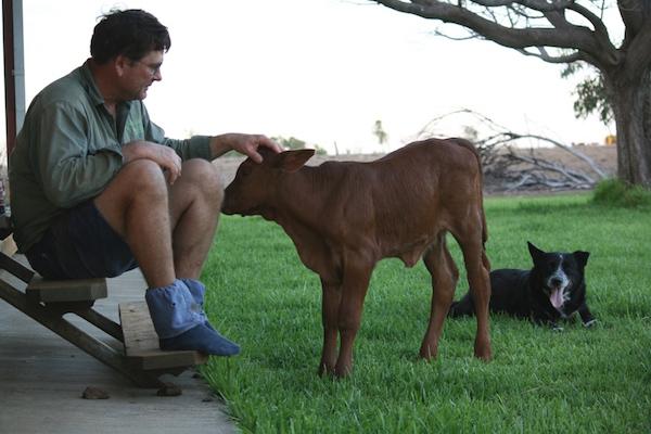 1.4 - Lydia as a calf