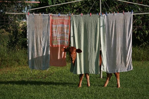1.8 - Charlotte washing line