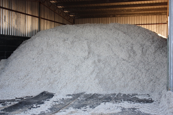 3.2 - Cottonseed in shed