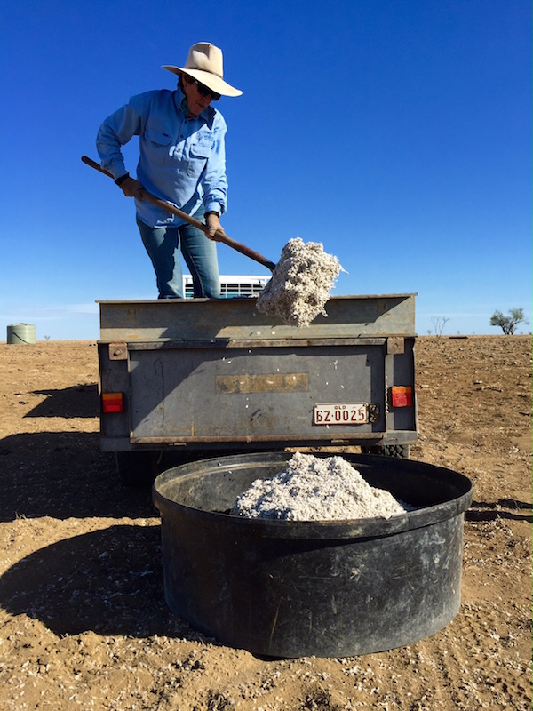 3.6 - Shovelling cottonseed