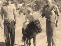 Horses, Camels, Medical emergencies and Isolation