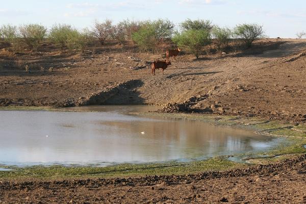 4.3 - Little Horse dam - 14 December 2013