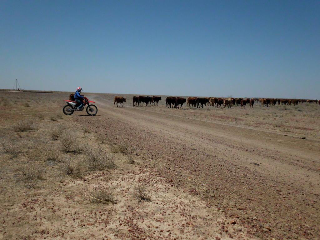 3.4 Mustering using bikes