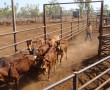 Cattle Sense and People Skills