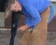 The Head Stockwoman's new challenge
