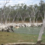 Mustering at Harry's camp