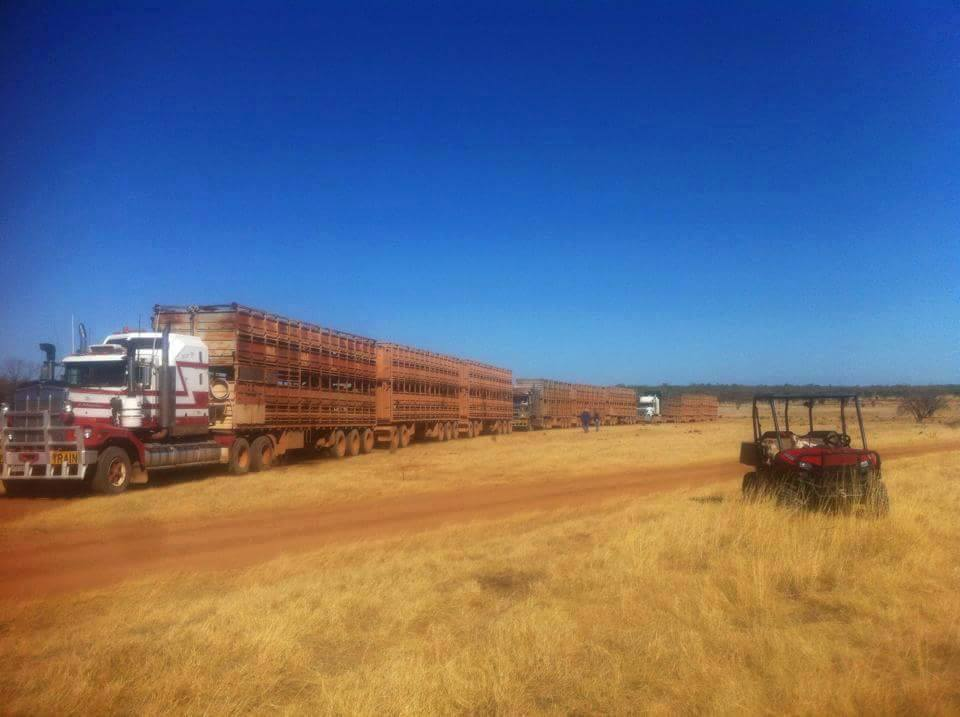 4. Trucking out 18 decks of heifers (576 in total) for fattening