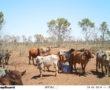 Rangelands Self Herding – A Novel Approach to Livestock Management