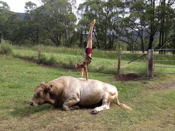 3.1 Dartanion - handstand on bull copy