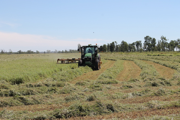 Photo 5. Cutting Jarra hay copy