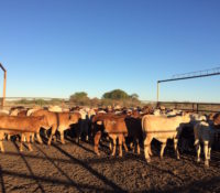 Training the weaners