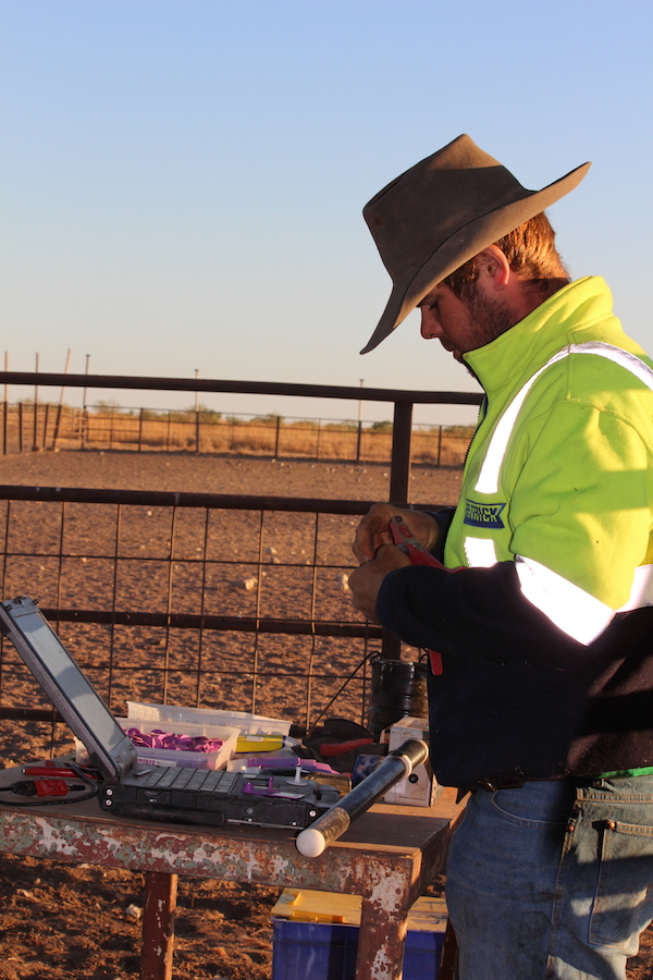 5. Mick Pocock working hard on our cattle ID system copy