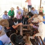 Barkly Herd Management Forum