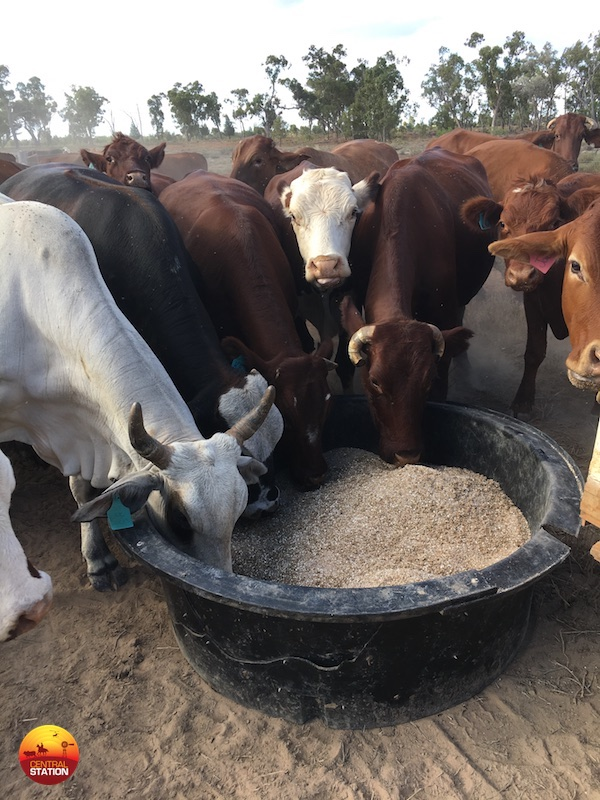 Cattle dry lick mixes