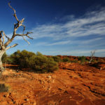 Drought in Northern Australia
