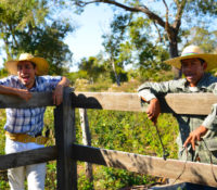 The stolen ranches of Brazil