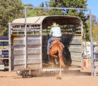 The Inaugural Colt Starting Competition in Coonamble!